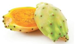 Prickly-pears