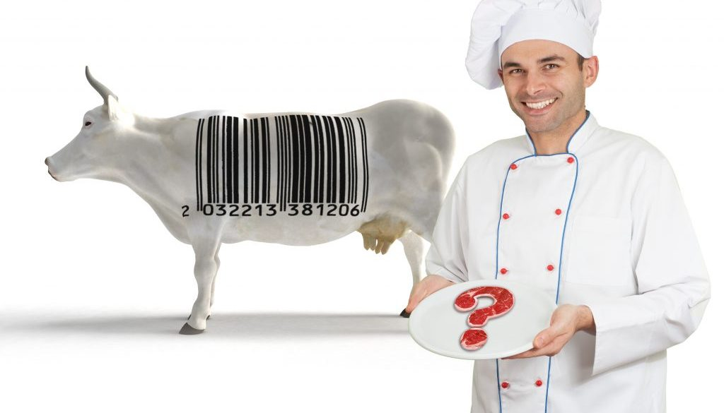 Chef and cow