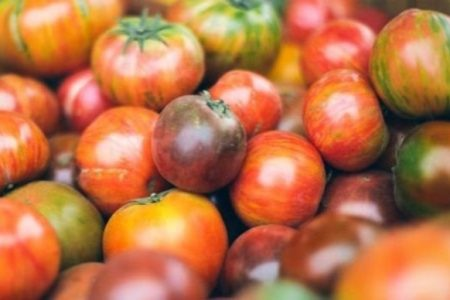 Why tomatoes are suddenly so expensive – and in scarce supply