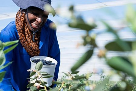 SA's fantastic blueberry growth story