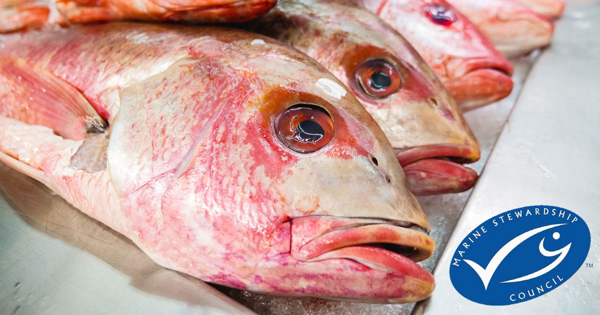 Sustainable seafood sales reached an all-time high as shoppers cooked at home in 2020-21